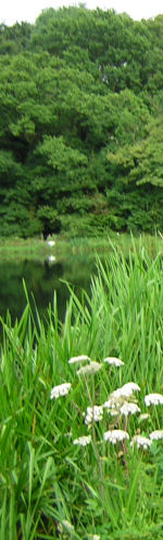 Contact Information and Directions for fishing at Chiphall Lake, a Trout Fishery located near Wickham, Hants Hampshire